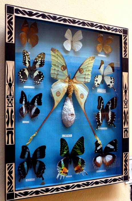 Motýli v hotelu v Ivatu