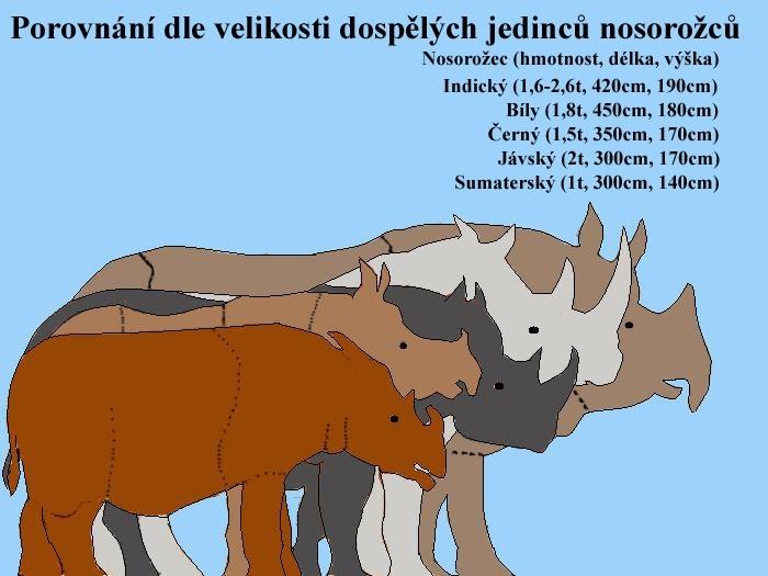 Porovnání velikostí nosorožců