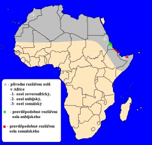 Osel africký (Equus africanus) - rozšíření