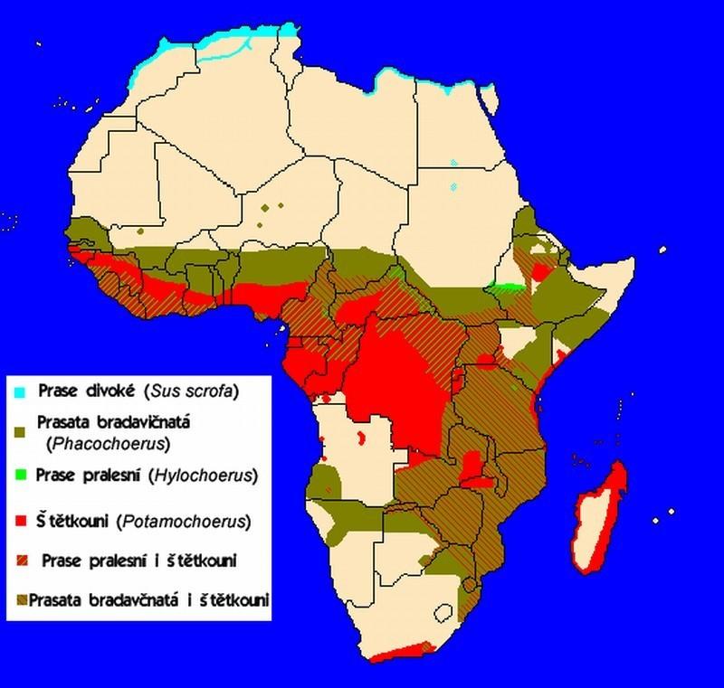 Mapa rozšíření prasat v Africe