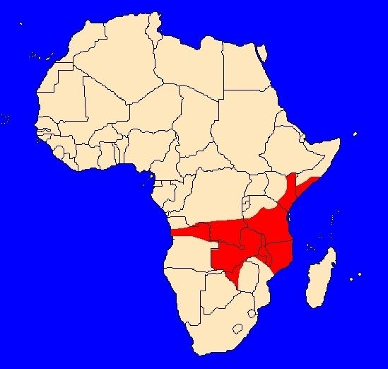 Rozšíření paviána babuina