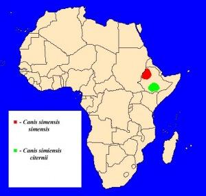 Vlček etiopský (Canis simensis) - rozšíření