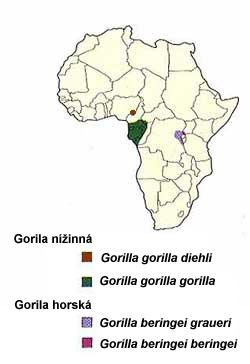 gorila rozšíření
