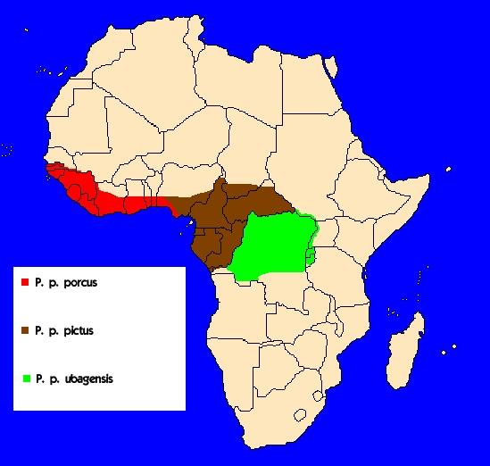 Štětkoun africký (Potamochoerus porcus) - rozšíření