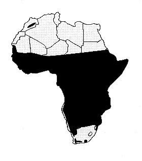 Levhart skvrnitý (Panthera pardus pardus) - rozšíření