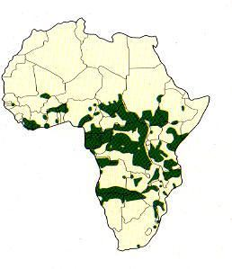 Areál rozšíření slonů v Africe