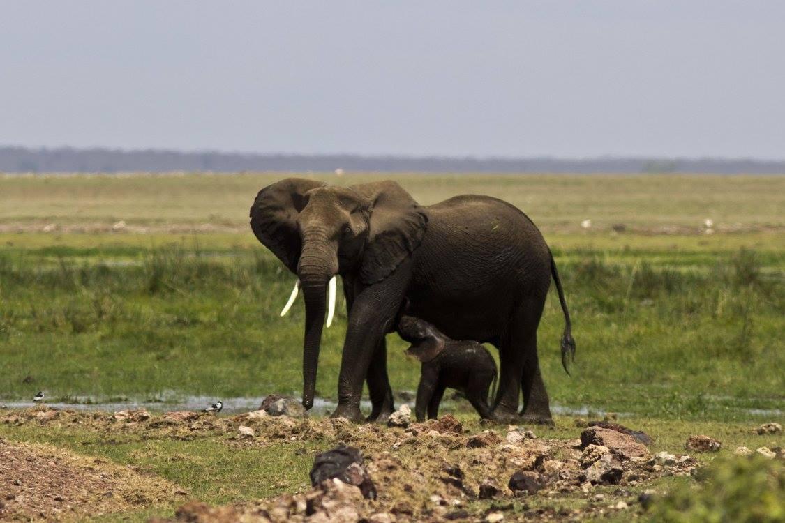 Slon africký (foto: Jana Hajduchová)