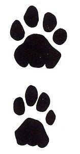 Levhart skvrnitý (Panthera pardus pardus) - stopy