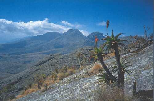 Plochý vrchol Inyangani